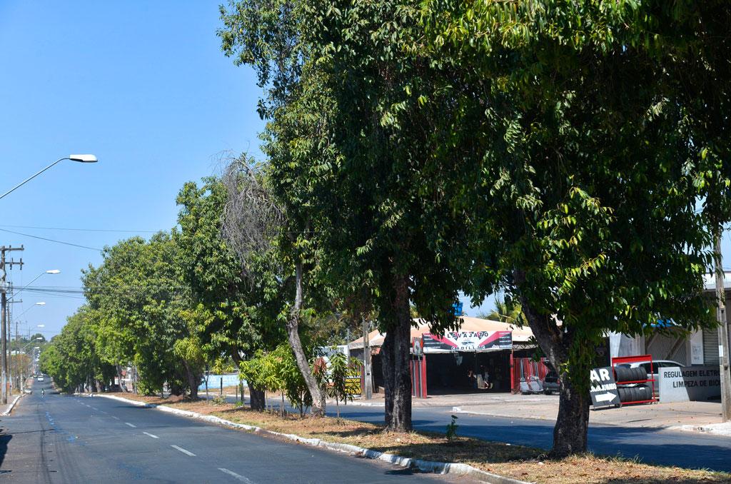 Prefeitura realiza a poda de Jamelões antes do período chuvoso