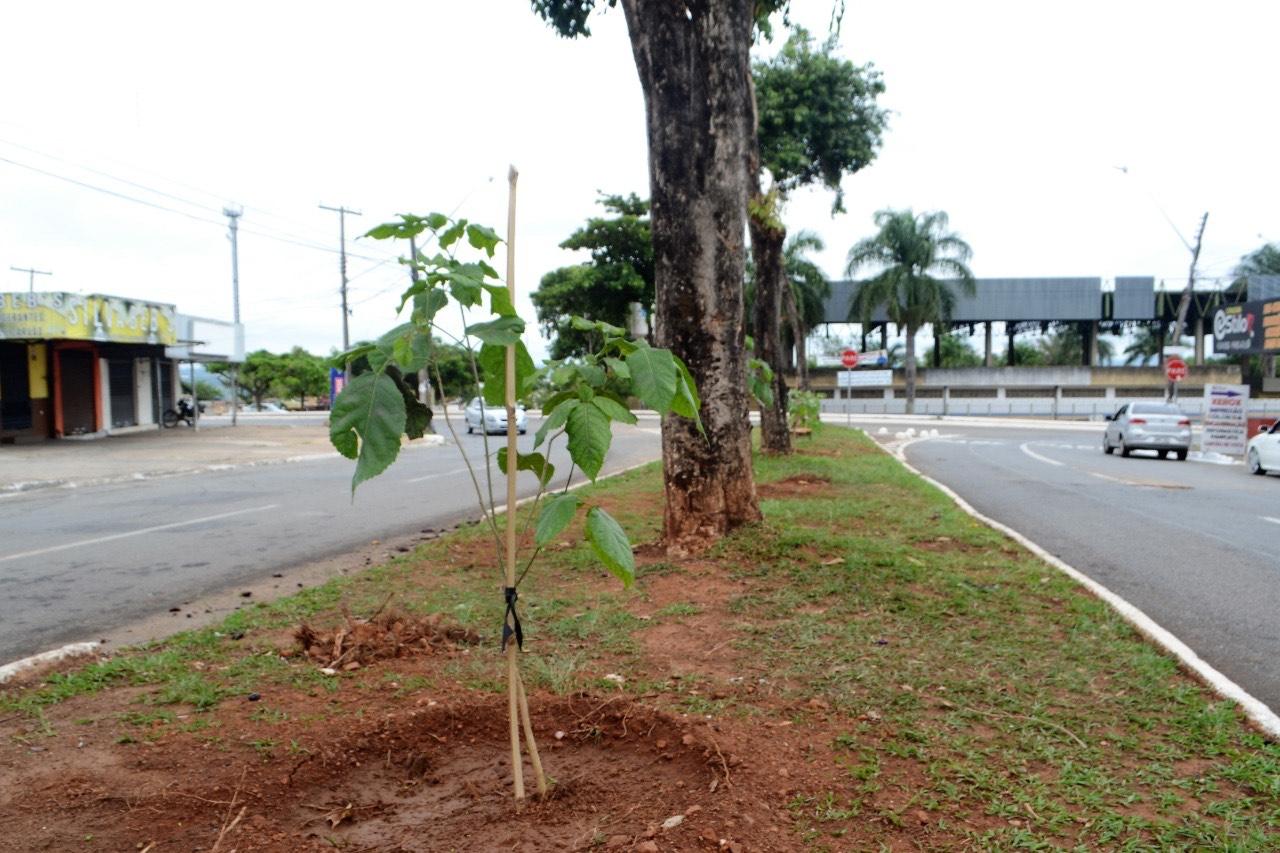 Prefeitura planta 150 mudas de Ip� no Jardim Novo Mundo