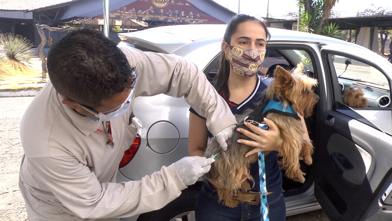 Campanha de Vacinação antirrábica acontece nas regiões Oeste e Sudoeste de Goiânia